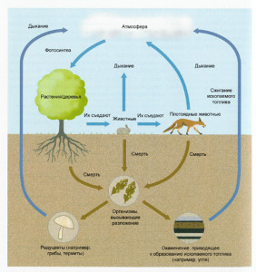 cycle-power-organisms